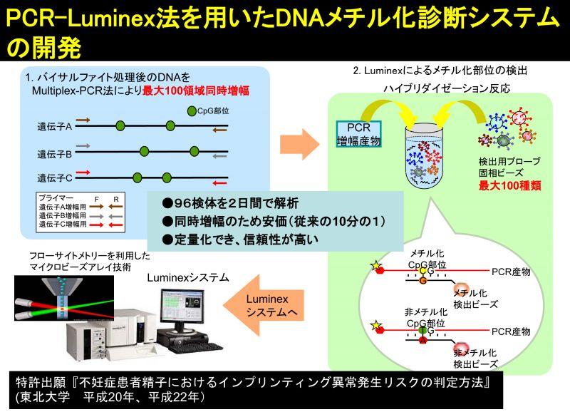 イン プリンティング ゲノム Restriction Enzymes