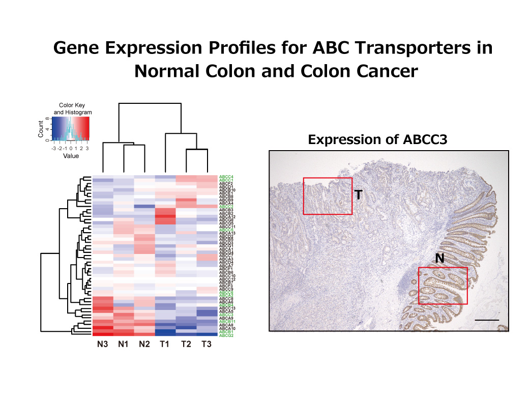 Keyword C Tu Research Profiles Show Transcribed Image Text Draw The Shear And Bendingmoment Diagrams Regulation Of Abc Transporters In Colorectal Cancer